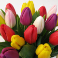 Tulipany mix BT-09-04 b